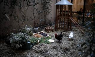 Animations & formations - L'animal jardinier