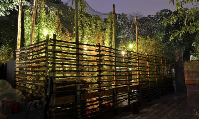 Le houblon et les faisans - Jardin des Tuileries à Paris (75) 1