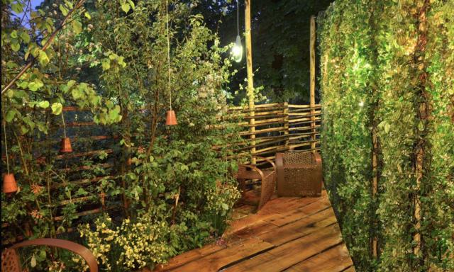 Le houblon et les faisans - Jardin des Tuileries à Paris (75) 3